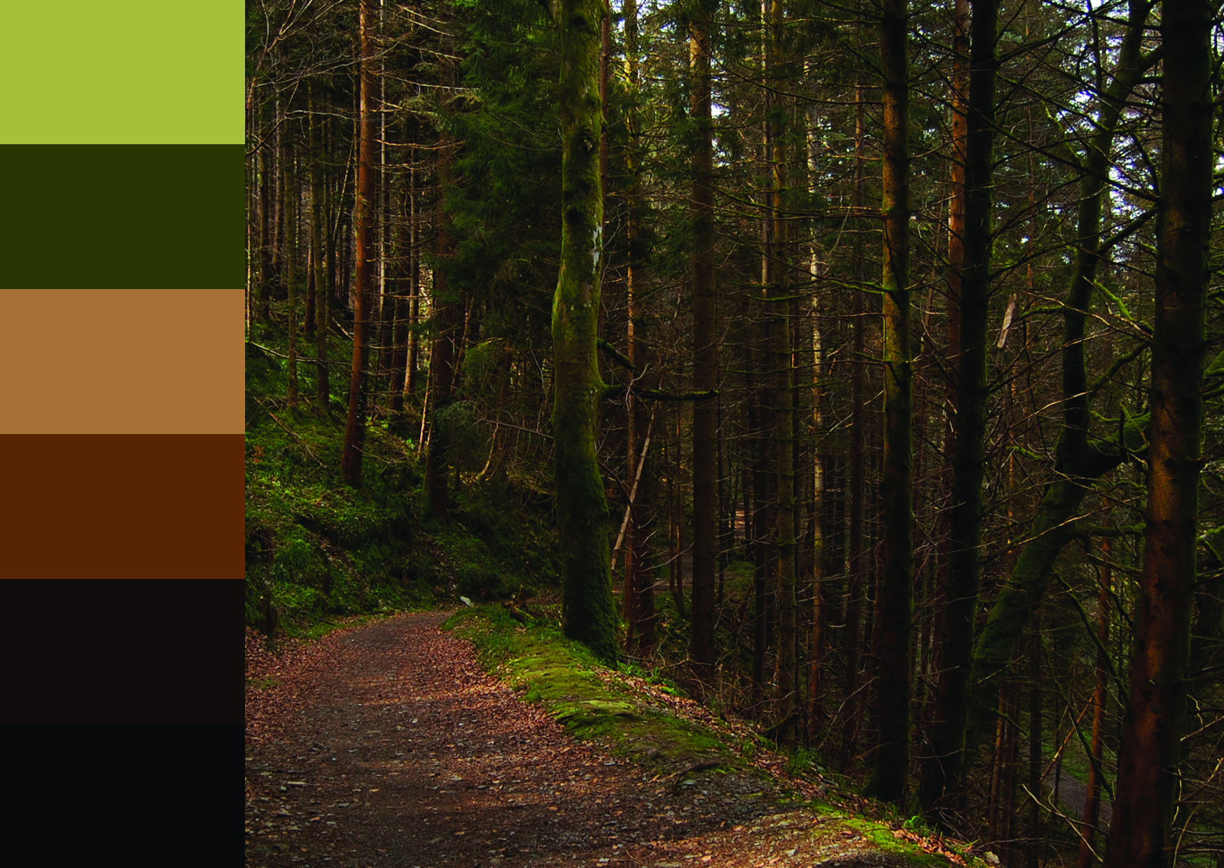 Paula Barrett, Colour Samples: Ireland: Devil's Glen